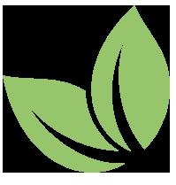 disegno foglioline verdi